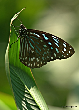 Butterfly @ Kuala Lumpur Lake Garden
