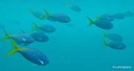 School of fish at Hardy Reef