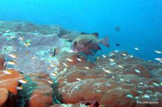 Fish over the hard corals at Hardy Reef