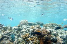shallow parts of hardy reef